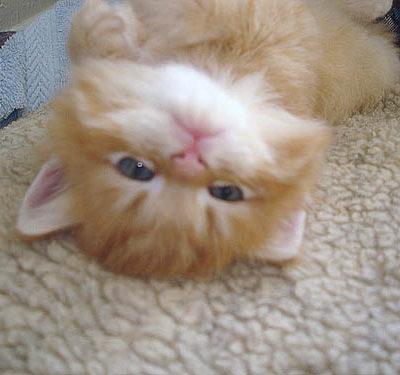 I'm so cute!