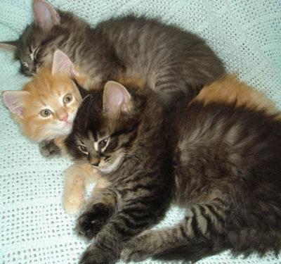 Three brothers sleeping.